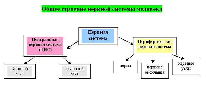 Биологический отдел центра педагогического мастерства
