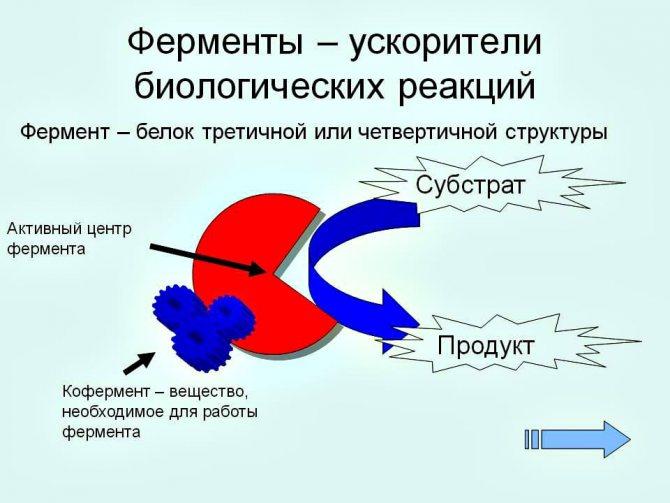 """""""вобэнзим"""": инструкция по применению, аналоги и отзывы"""
