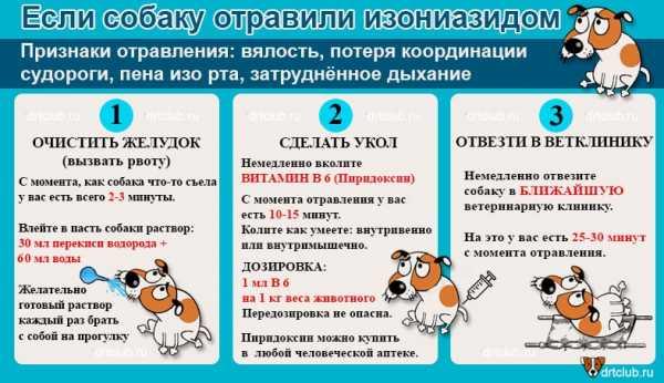 Отравление собаки догхантерами: симптомы и первая помощь