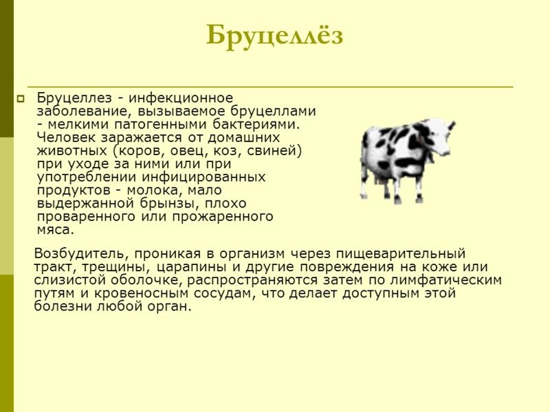 Бруцеллёз — википедия. что такое бруцеллёз