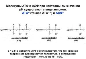 Аденозинтрифосфат - adenosine triphosphate