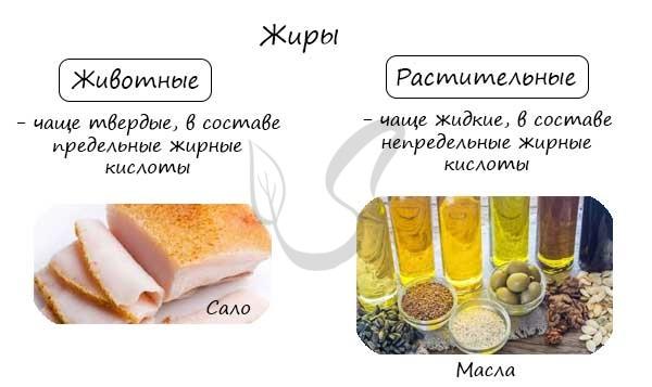 Функции жиров в организме, растительные и животные жиры в продуктах, таблица