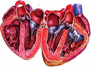 Врождённые и приобретённые пороки сердца