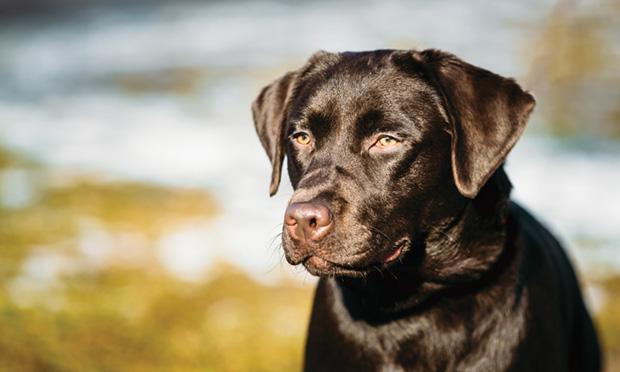 Москва, изониазид - изониазид инструкция по применению для собак - запись пользователя ❅юлька❅ (lusunja) в сообществе домашние животные в категории болезни любимцев - babyblog.ru