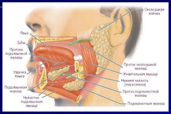 Этиология и патогенез пневмонии