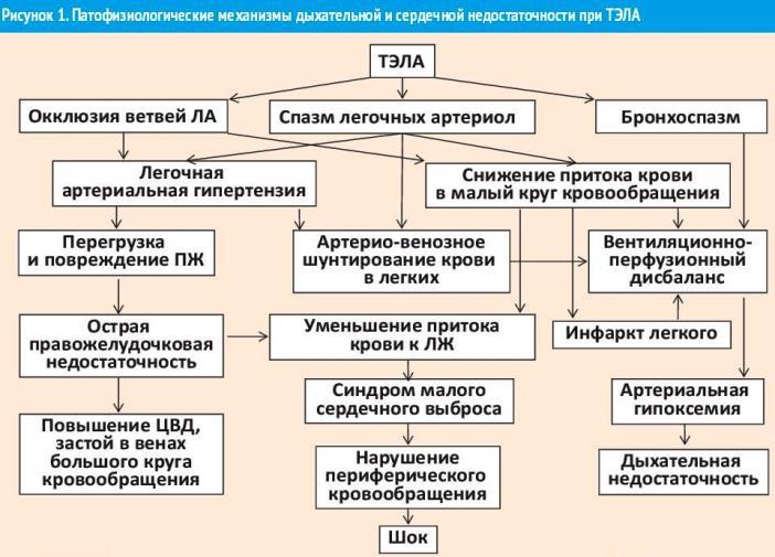 Что такое тромб, причины появления и как избежать появления тромба