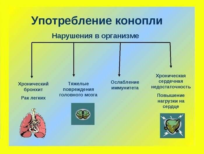 Аскорил и флюдитек разница