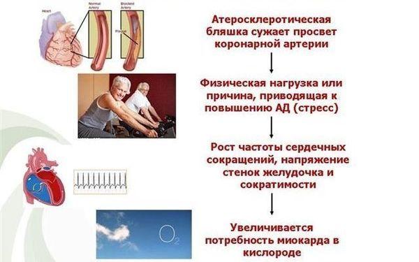 Инструкция по применению к амлотопу, показания и противопоказания, выбор аналогов