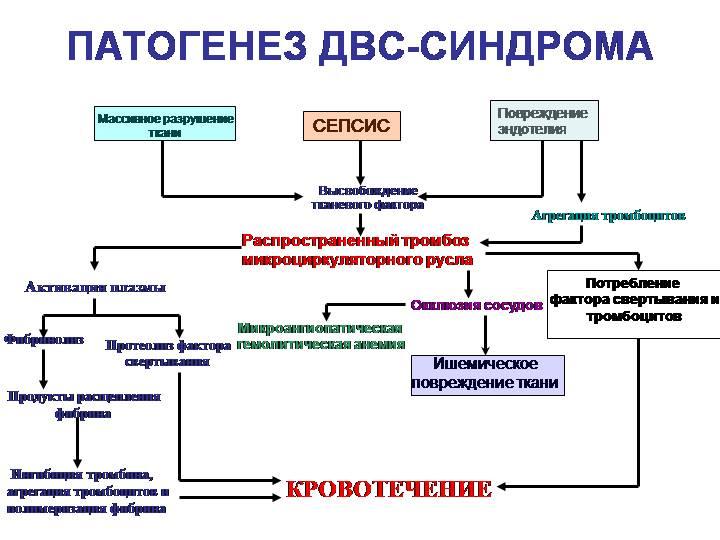 Общее понятие о болезни. этиология и патогенез. роль генетических факторов в патологии человека. - презентация