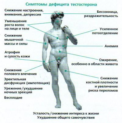 Тестостерон свободный это, что такое. функции и роль мужского гормона для женщин