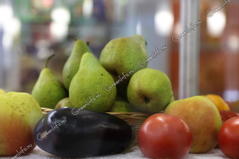 От груши толстеют или худеют