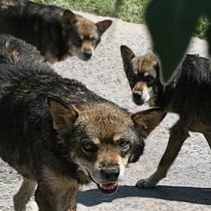 Применение таблеток изониазид для собак – инструкция
