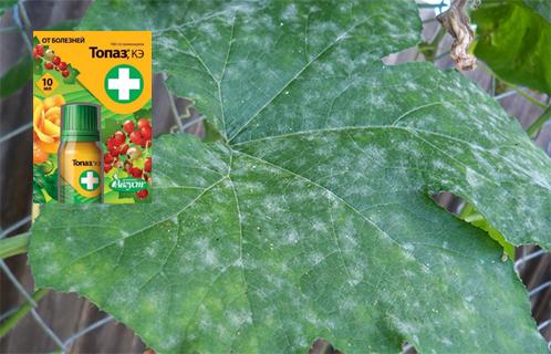 """Препарат """"топаз"""" от болезней растений и винограда"""