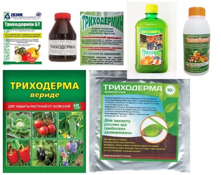 Биопрепараты комплексного действия повышают продуктивность и защищают растения от болезней
