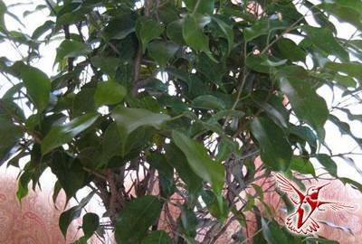 15 комнатных растений, которые очистят от токсинов воздух вашего дома