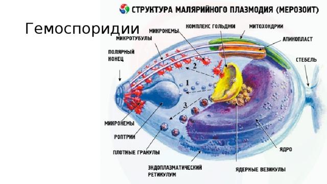 Книдоспоридии паразиты отряды