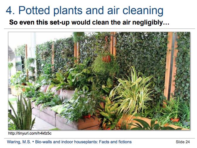 Полезные комнатные растения, которые очищают воздух