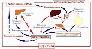 Новый препарат форсига (механизм действия, возможные пагубные эффекты, аналоги и можно ли его использовать для похудения)