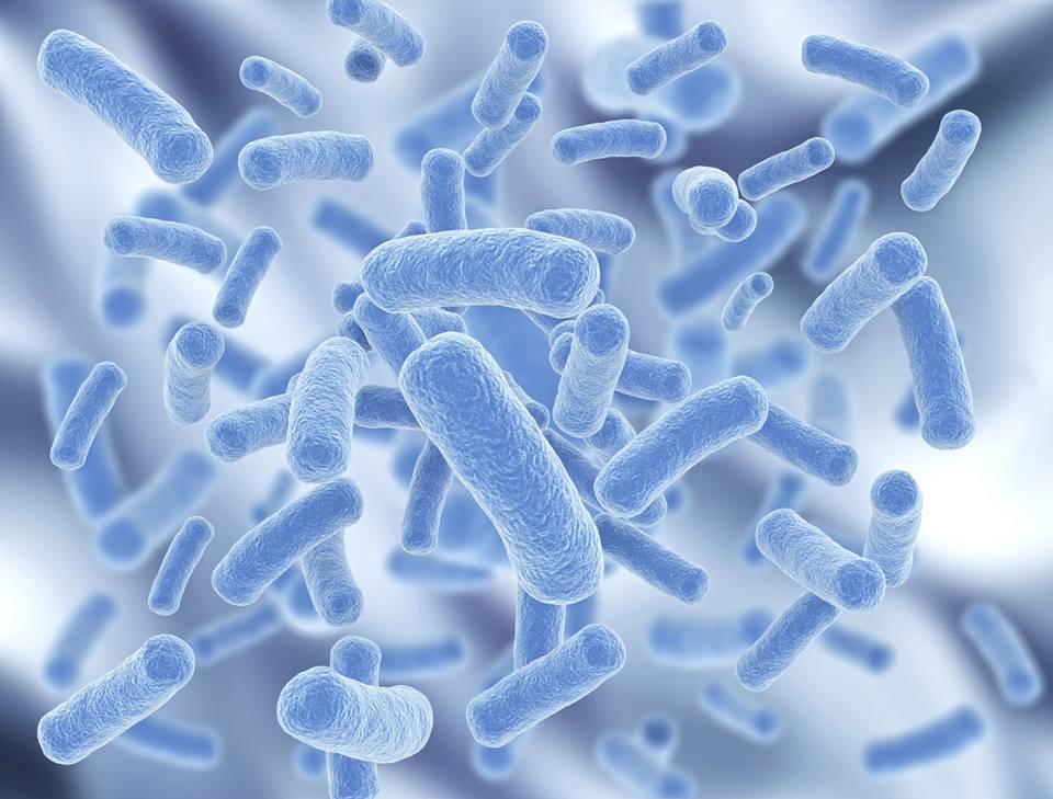 E. coli (кишечная палочка): чем она опасна?