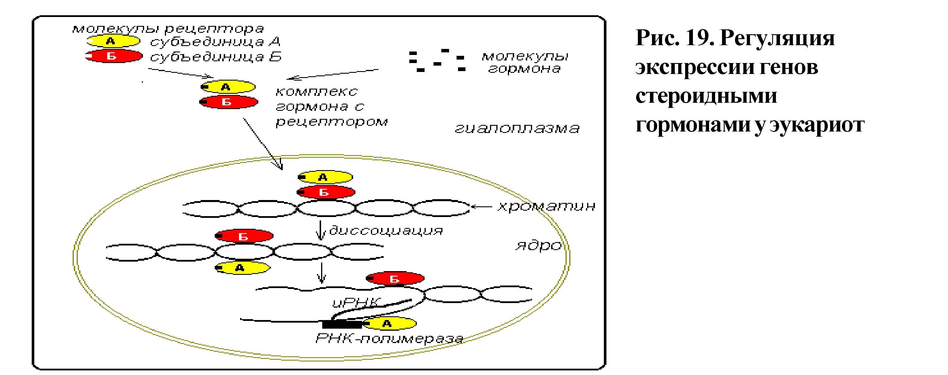 Экспрессия генов — википедия. что такое экспрессия генов