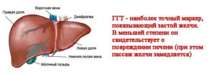 Показатели анализа крови при пневмонии