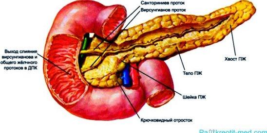 Заболела поджелудочная железа первые признаки и симптомы панкреатита