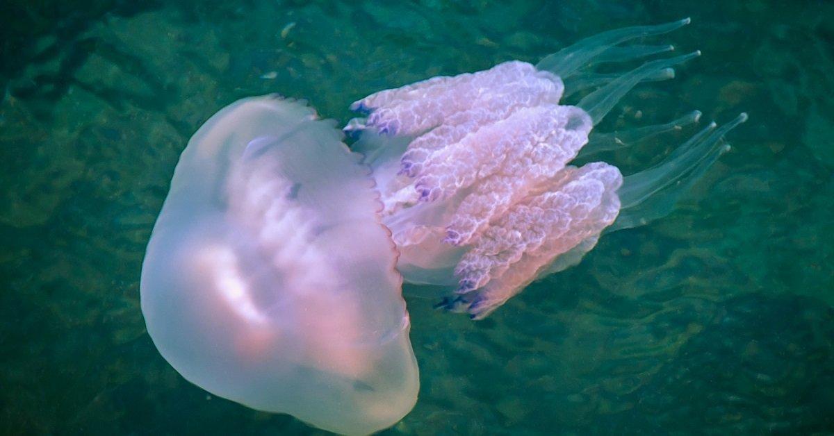 Как правильно лечить ожог медузы в домашних условиях