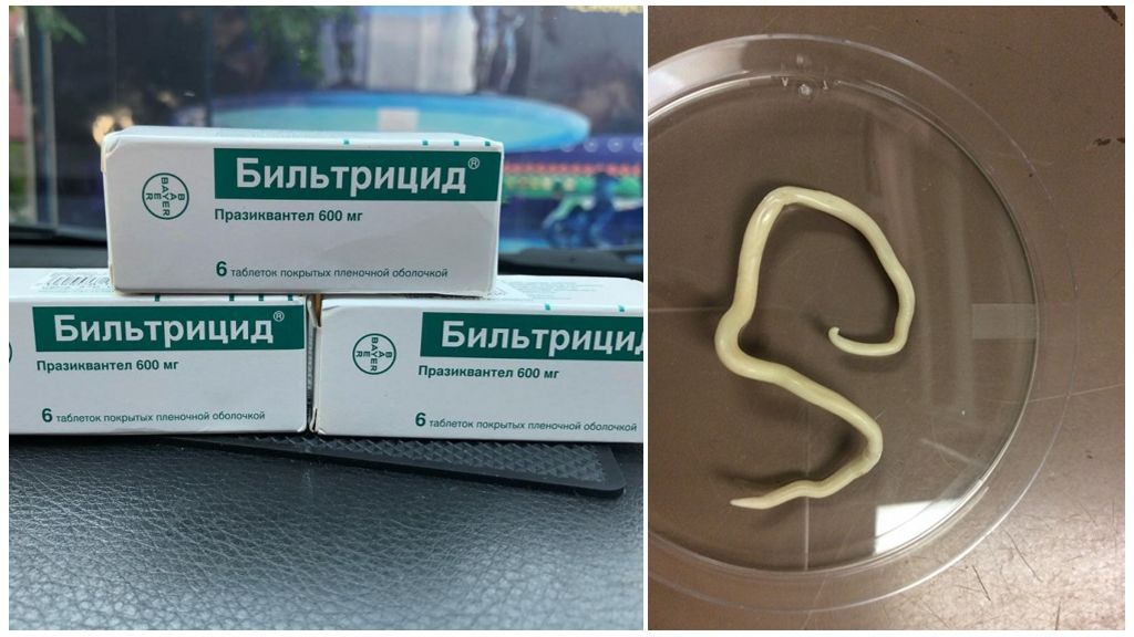 Мнение паразитологов о препарате бильтрицид