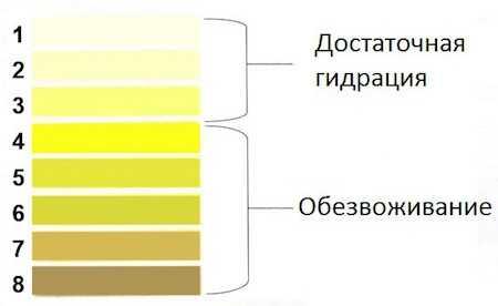 Полезные советы по определению причины изменения цвета мочи