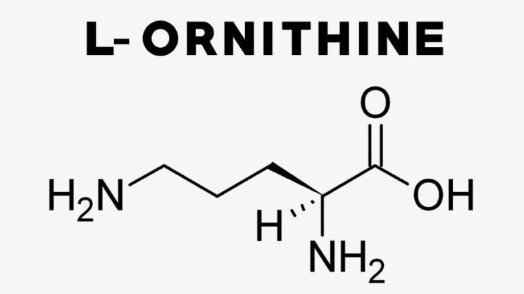 Орнитин: инструкция по применению, для чего нужен