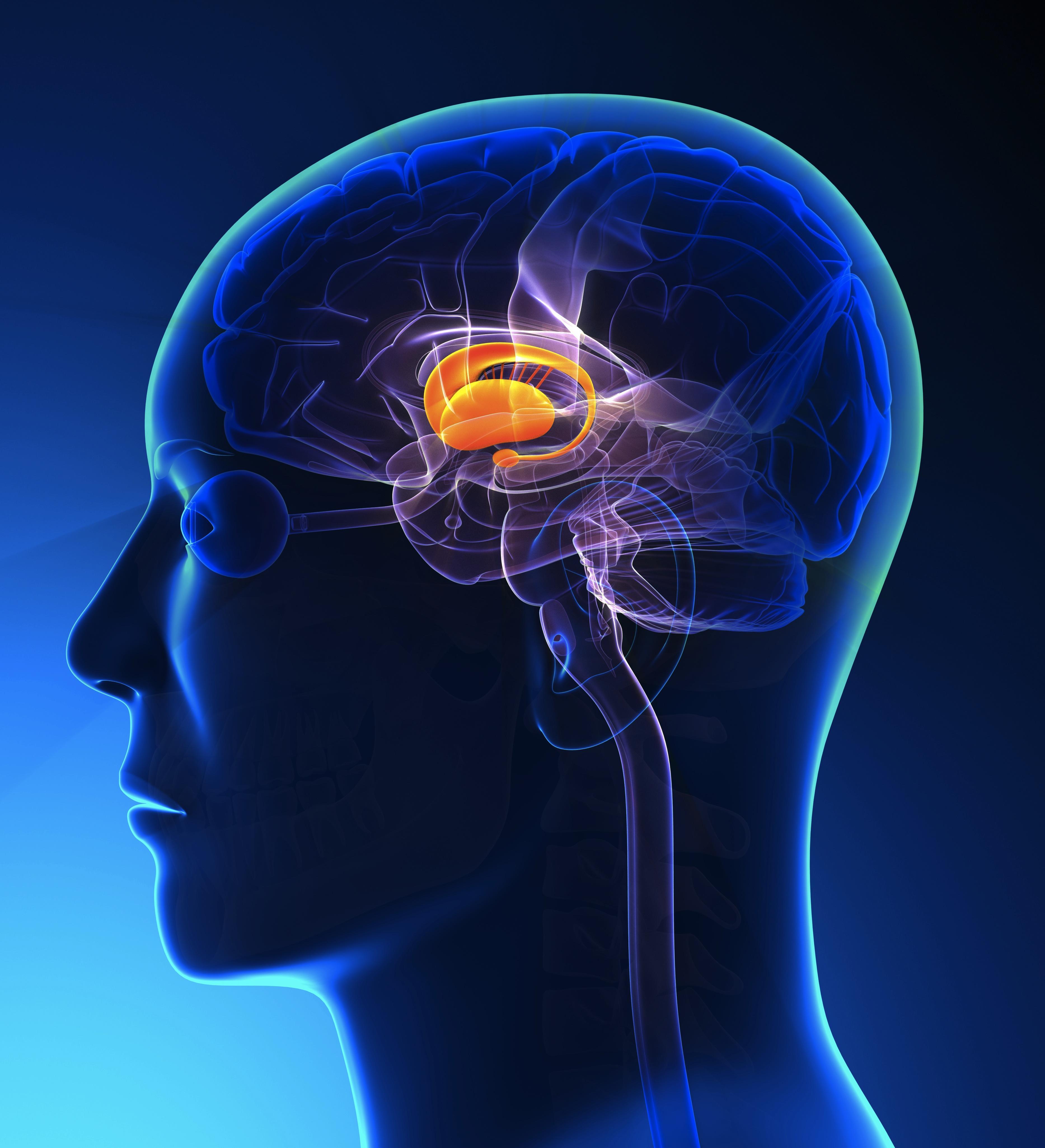 Строение головного мозга — за что отвечает каждый отдел?