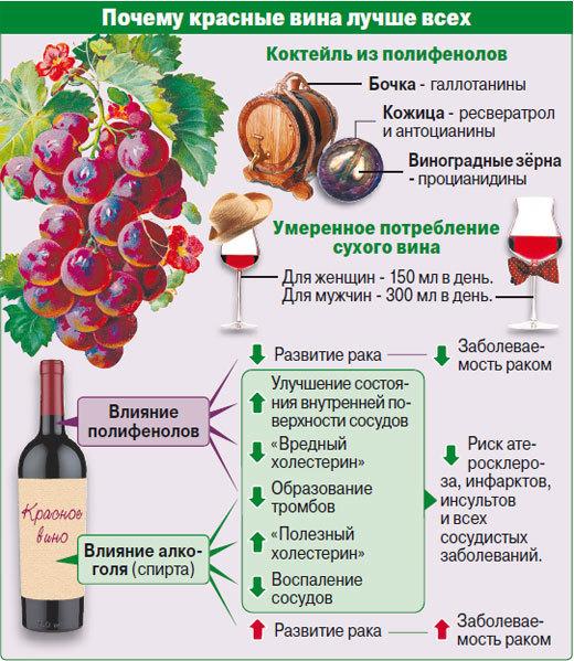 Болезни вина? какими болезнями может болеть вино?