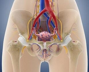 Почему болит левый бок внизу живота у женщин – причины и лечение