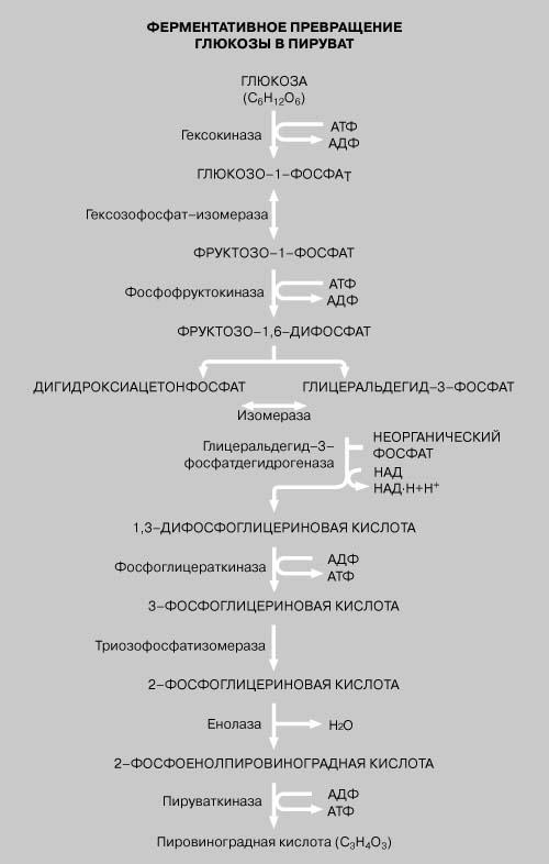 """""""обнаружение ферментов. изучение условий протекания ферментативных реакций"""""""
