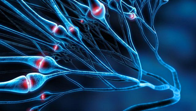 Прионы и амилоиды: ключевые свойства ироль вприроде