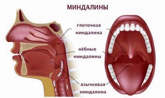 Ушные капли: при отите, с антибиотиком, для детей, капли в уши от воспаления, от боли