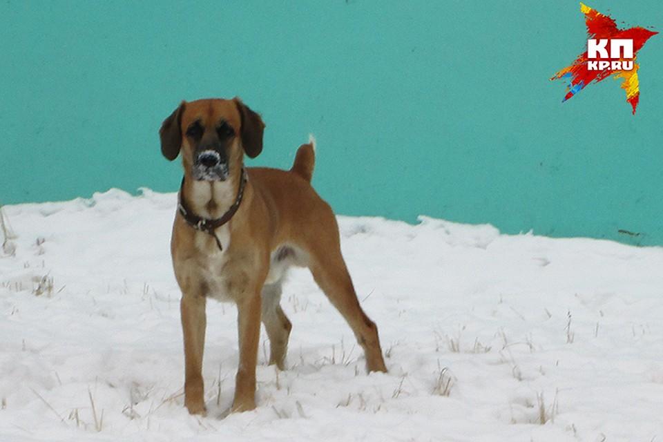 Признаки отравления собаки: изониазидом и правила первой помощи