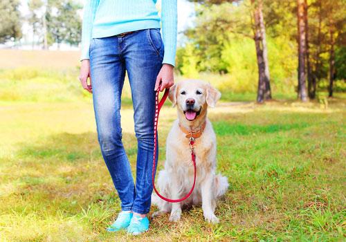 Бравекто для собак – подробная инструкция по применению таблеток и капель, обзор аналогов препарата. предупреждение агентства санитарного контроля сша