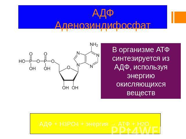 Аденозин дифосфат - adenosine diphosphate