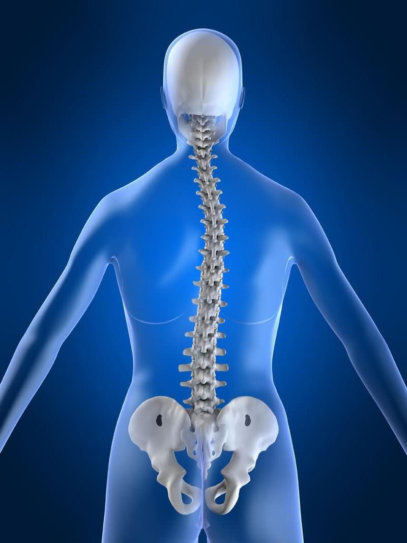 Лечебная физкультура при спондилолистезе