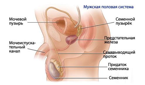 Определение признаков туберкулеза легких на ранних стадиях
