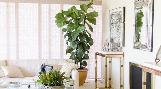 Сервис и уход за растениями в офисе.