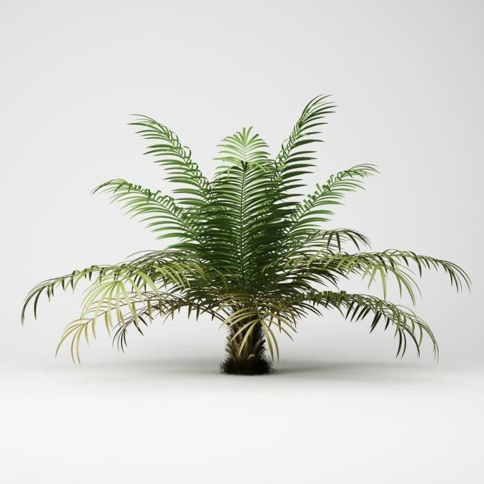 15 комнатных растений, которые очистят от токсинов воздух вашего дома » око планеты информационно-аналитический портал