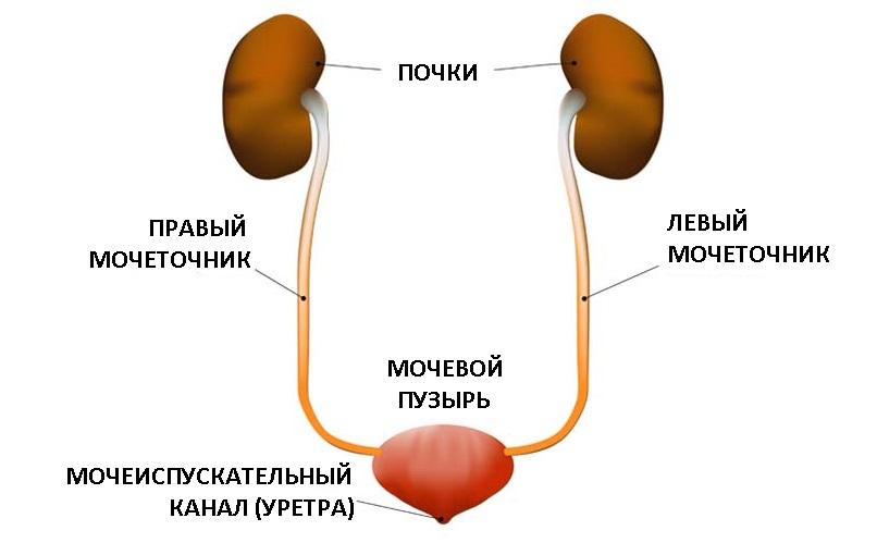 Нитрофурантоин*