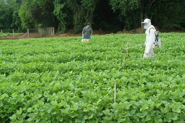 Лазурит — эффективная борьба с сорняками