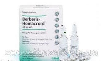 Берберис-гомаккорд: инструкция по применению