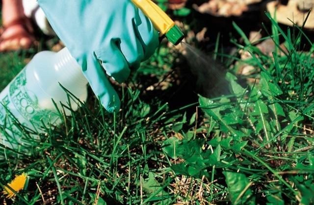 Инструкция по применению глифора от сорняков, описание гербицида и нормы расхода
