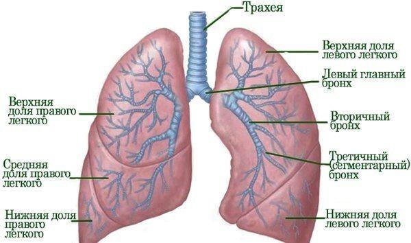 Как лечить пневмонию после кесарева у новорожденных? насколько опасны осложнения?
