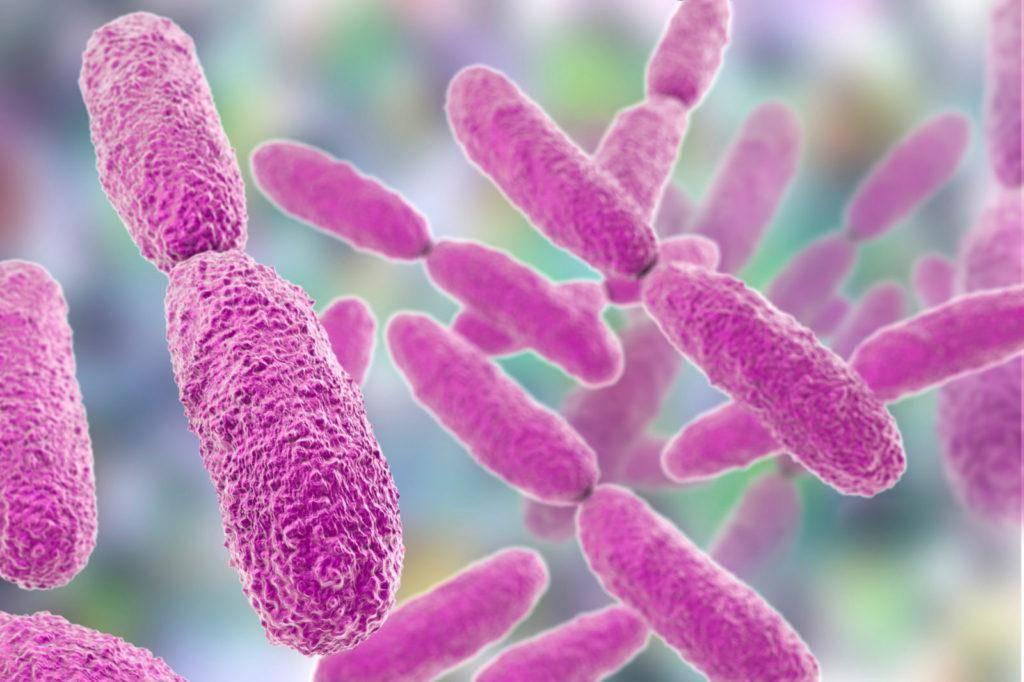 Симптомы и лечение клебсиеллы у грудничка в кале
