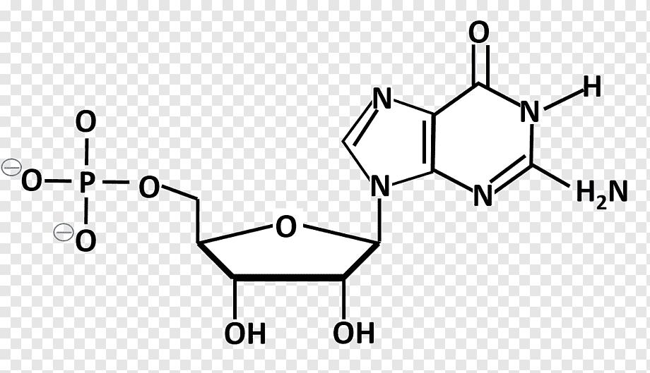 Аденозин википедия